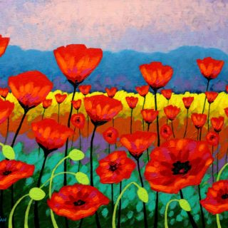 Field of  Poppies  20